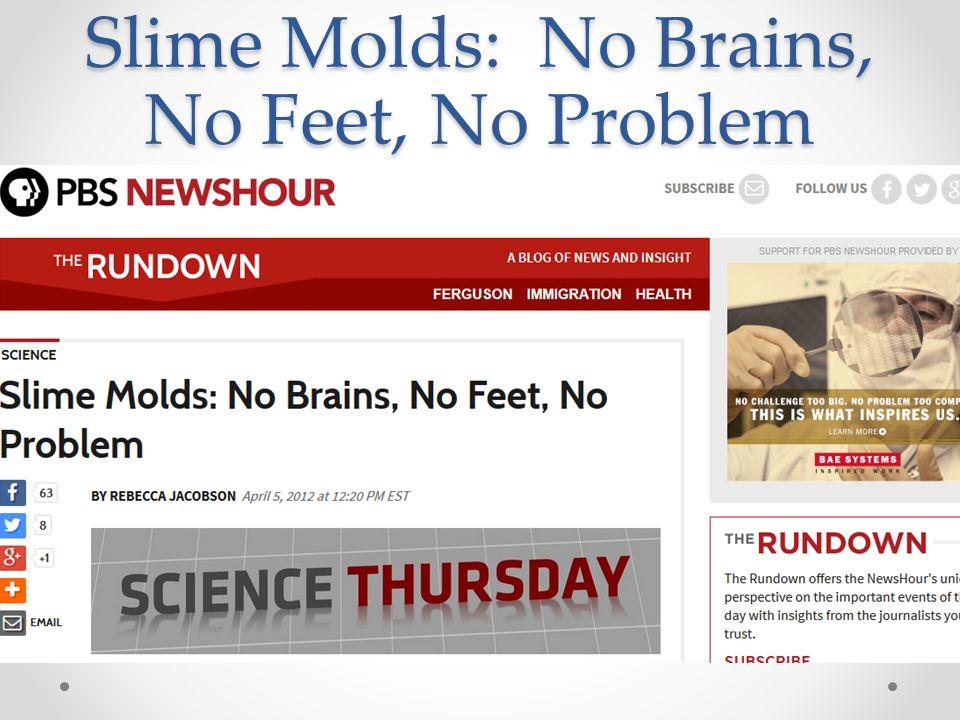 Slime Molds: No Brains, No Feet, No Problem