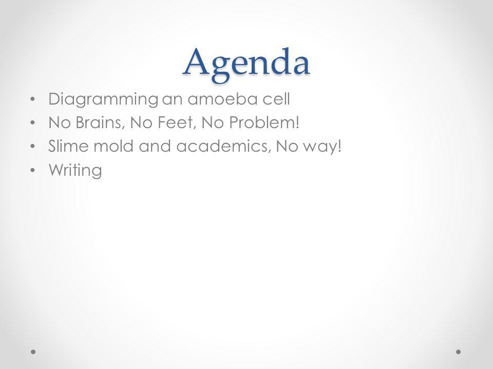 Agenda Diagramming an amoeba cell No Brains, No Feet, No Problem!