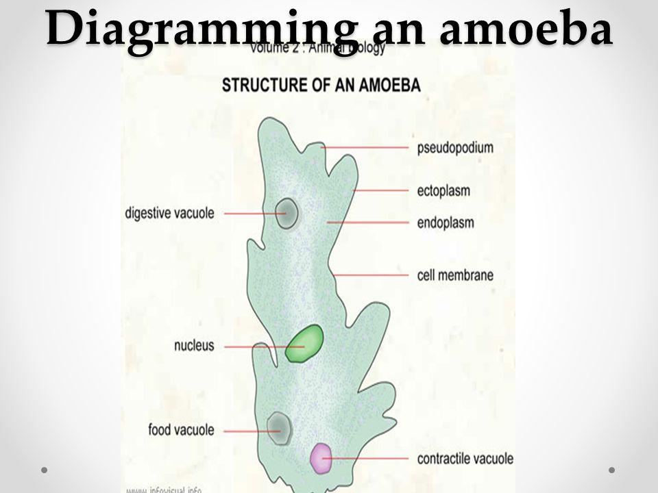 Diagramming an amoeba