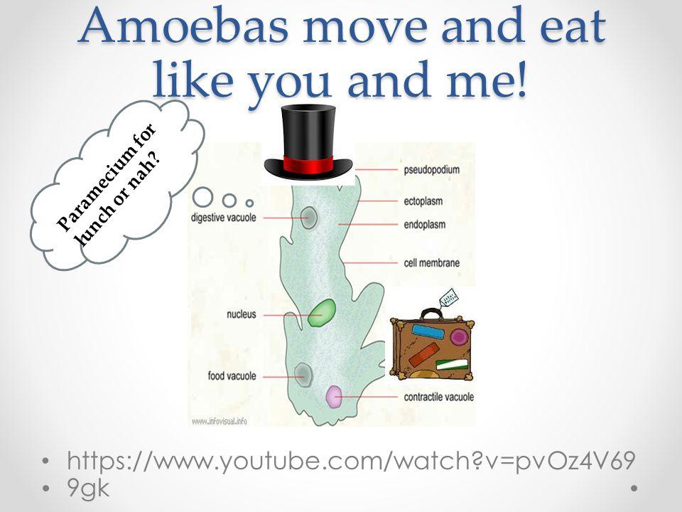 Amoebas move and eat like you and me!