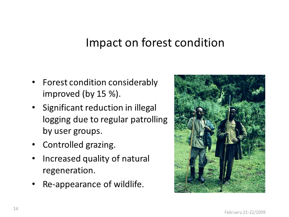 Impact on forest condition