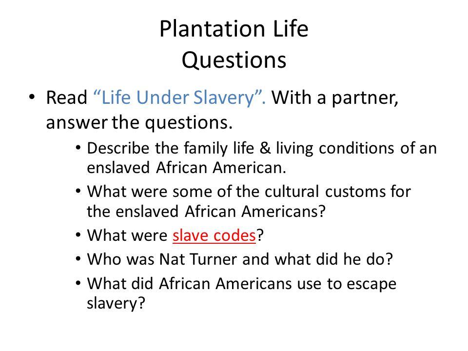 Plantation Life Questions