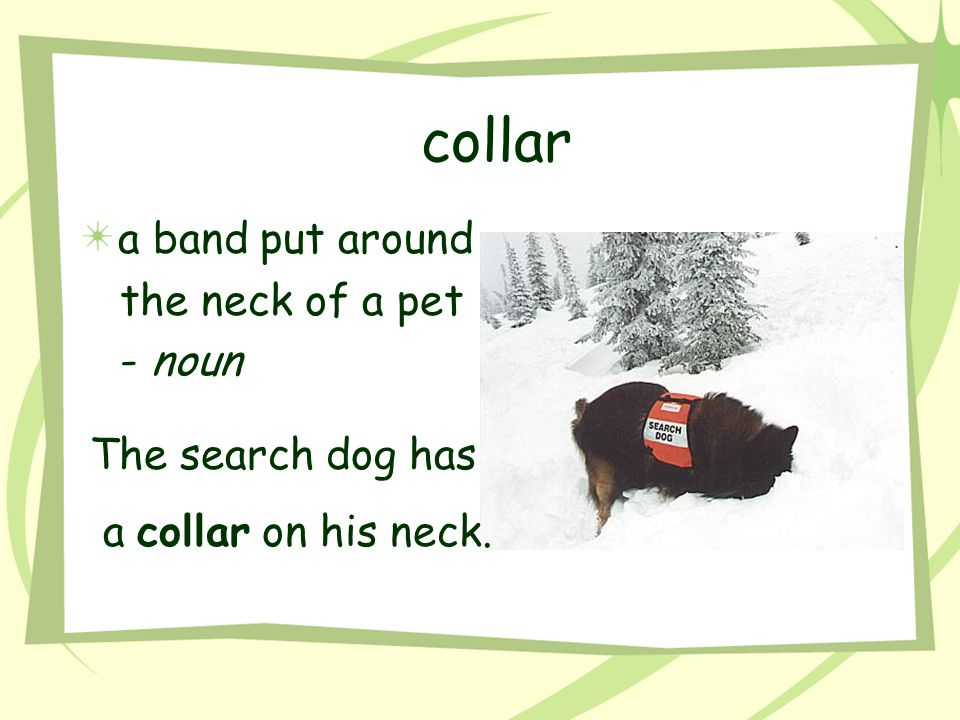 collar a band put around the neck of a pet - noun The search dog has
