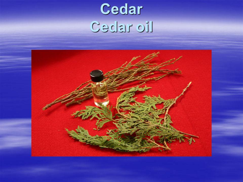 Cedar Cedar oil
