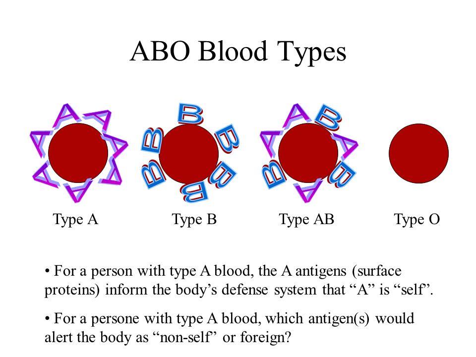 ABO Blood Types A A B B Type A Type B Type AB Type O