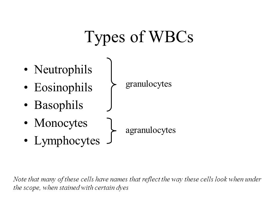 Types of WBCs Neutrophils Eosinophils Basophils Monocytes Lymphocytes