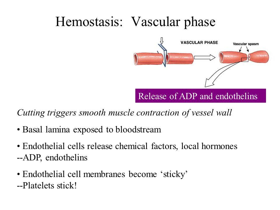 Hemostasis: Vascular phase