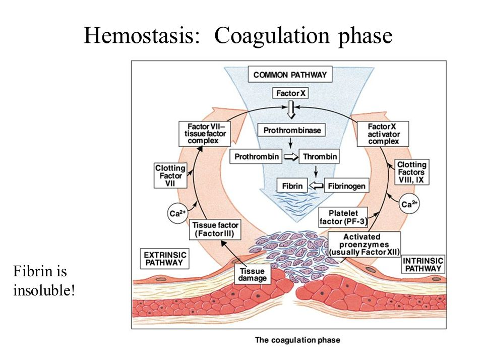 Hemostasis: Coagulation phase