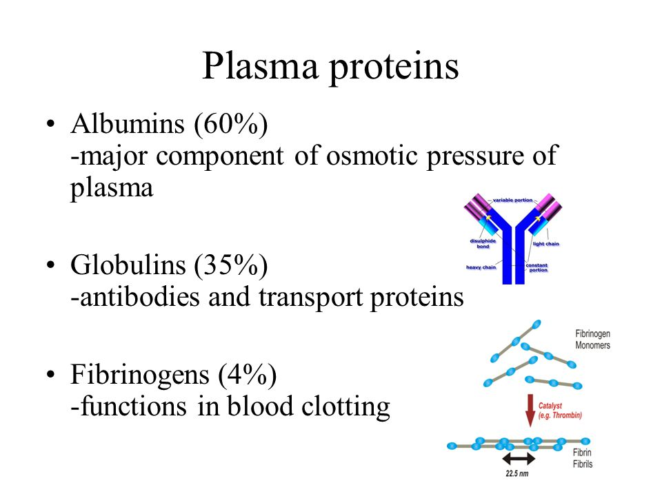 Plasma proteins Albumins (60%) -major component of osmotic pressure of plasma. Globulins (35%) -antibodies and transport proteins.