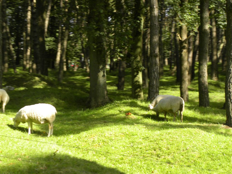 Vimy's lawn mowers at work