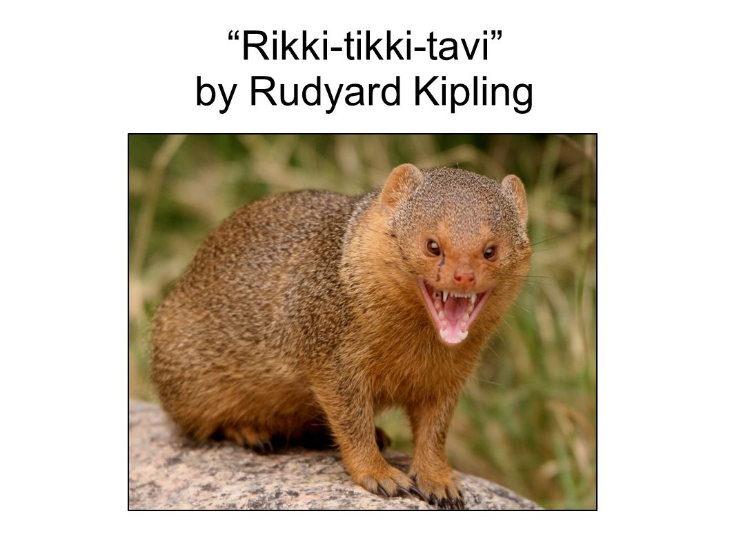 rikki tikki tavi by rudyard kipling ppt download. Black Bedroom Furniture Sets. Home Design Ideas