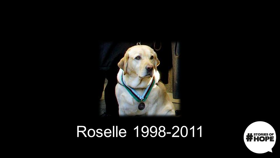 Roselle 1998-2011 Roselle was awarded the American Hero Dog of the Year Medal in 2011. From then on she was nicknamed Thunder Dog.