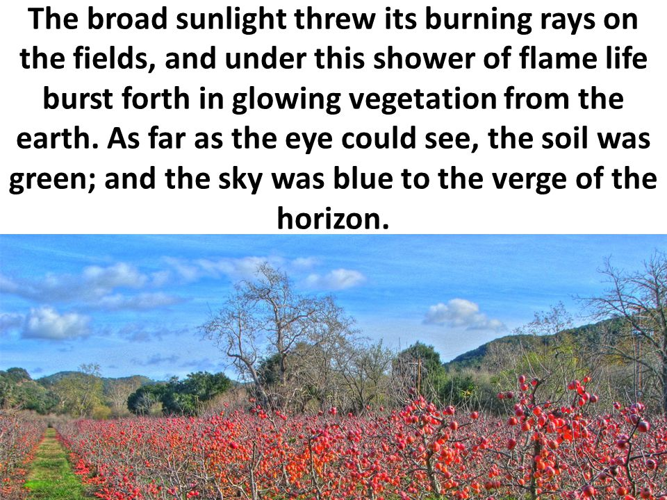 The broad sunlight threw its burning rays on the fields, and under this shower of flame life burst forth in glowing vegetation from the earth.