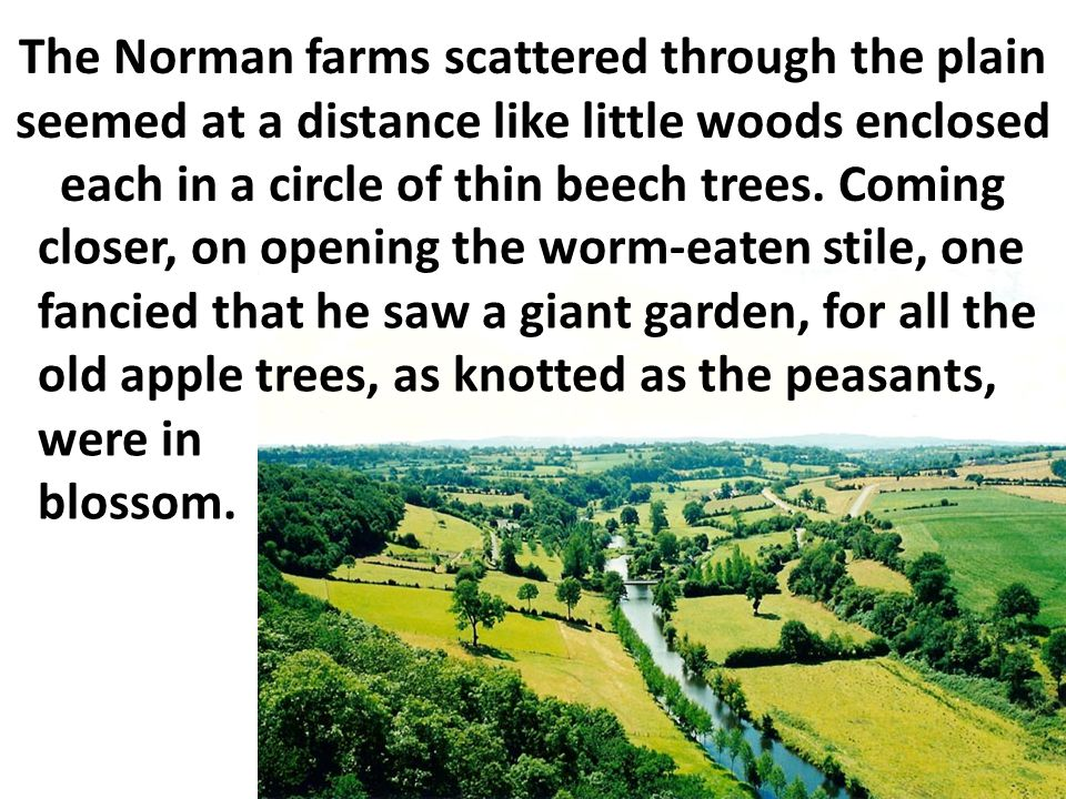 The Norman farms scattered through the plain seemed at a distance like little woods enclosed each in a circle of thin beech trees. Coming