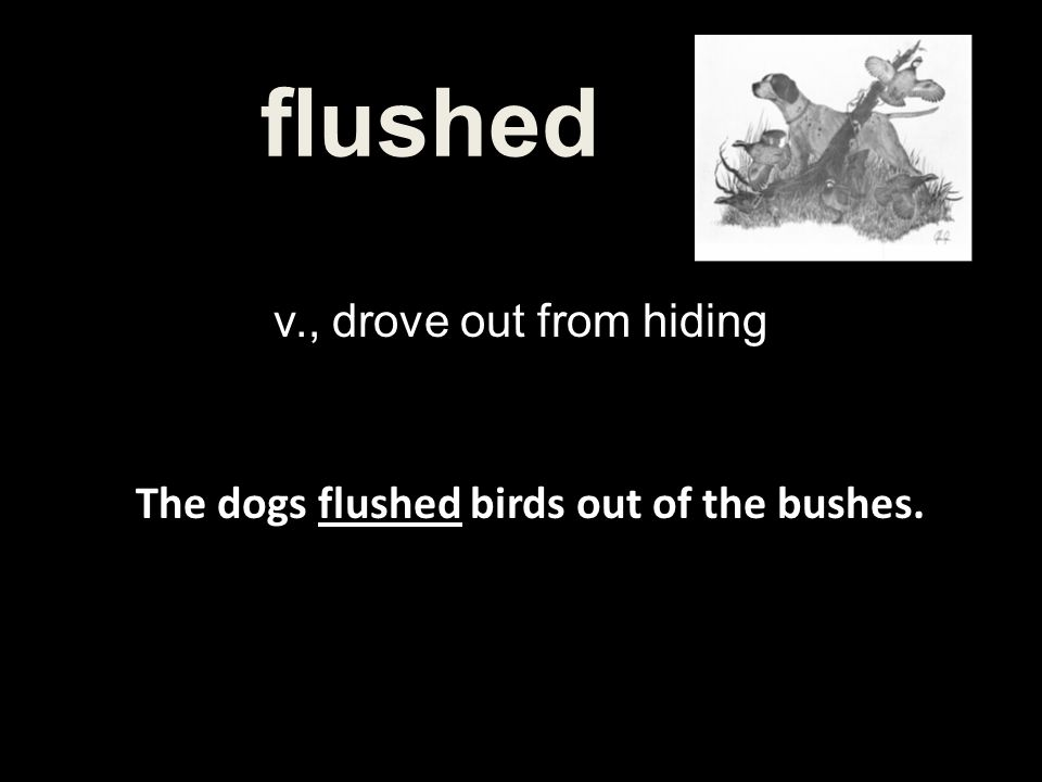 The dogs flushed birds out of the bushes.