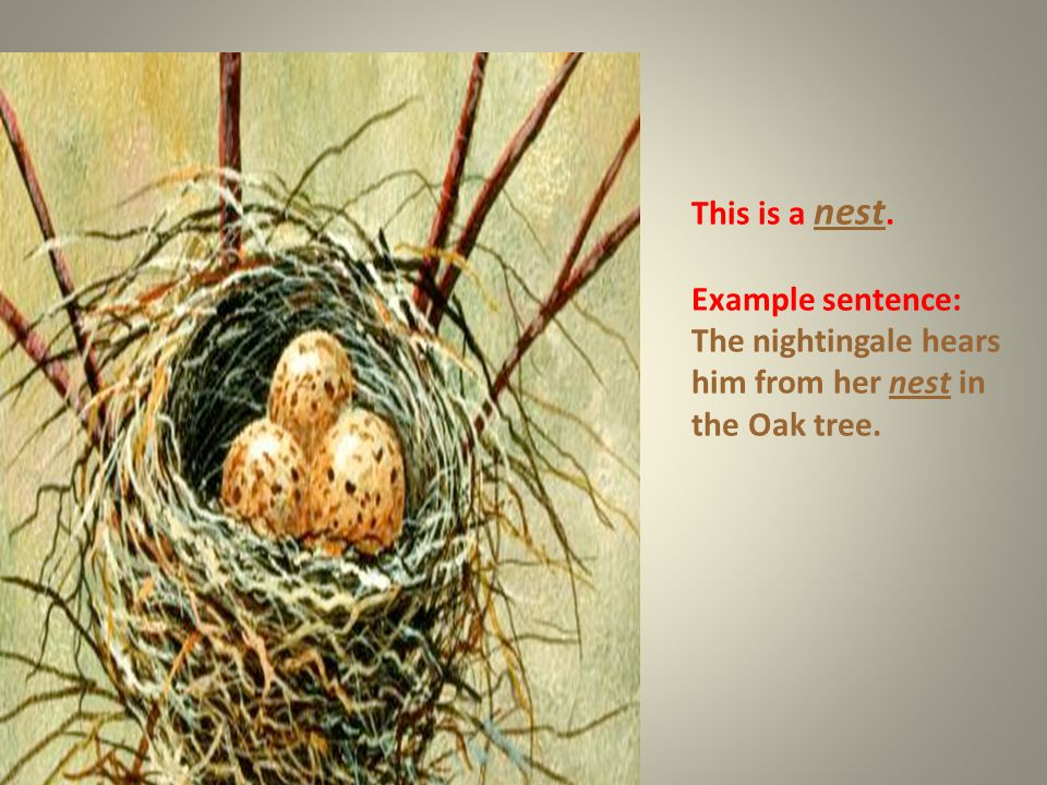 This is a nest. Example sentence: The nightingale hears him from her nest in the Oak tree.