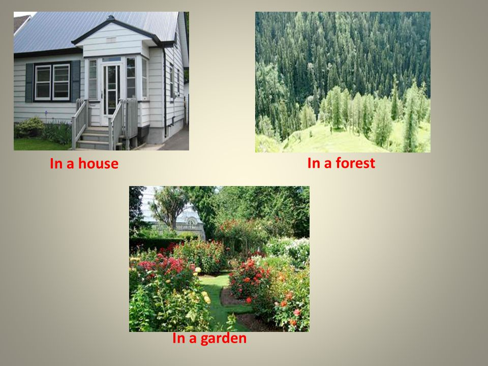 In a house In a forest In a garden