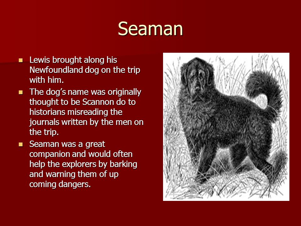 Seaman Lewis brought along his Newfoundland dog on the trip with him.