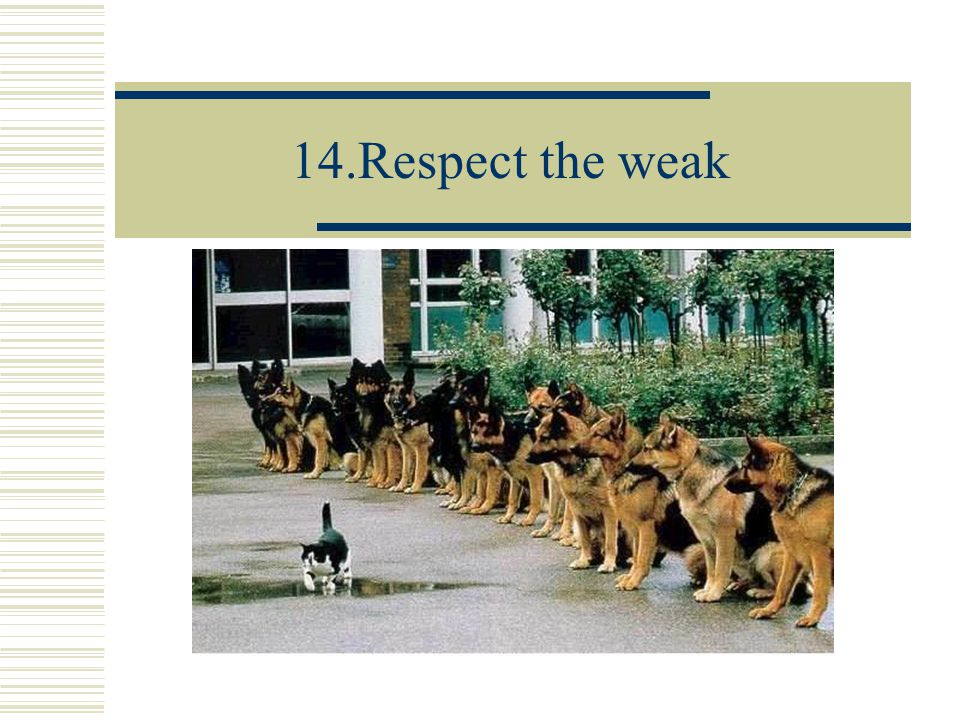 14.Respect the weak