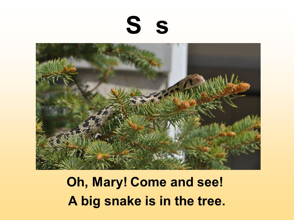 A big snake is in the tree.