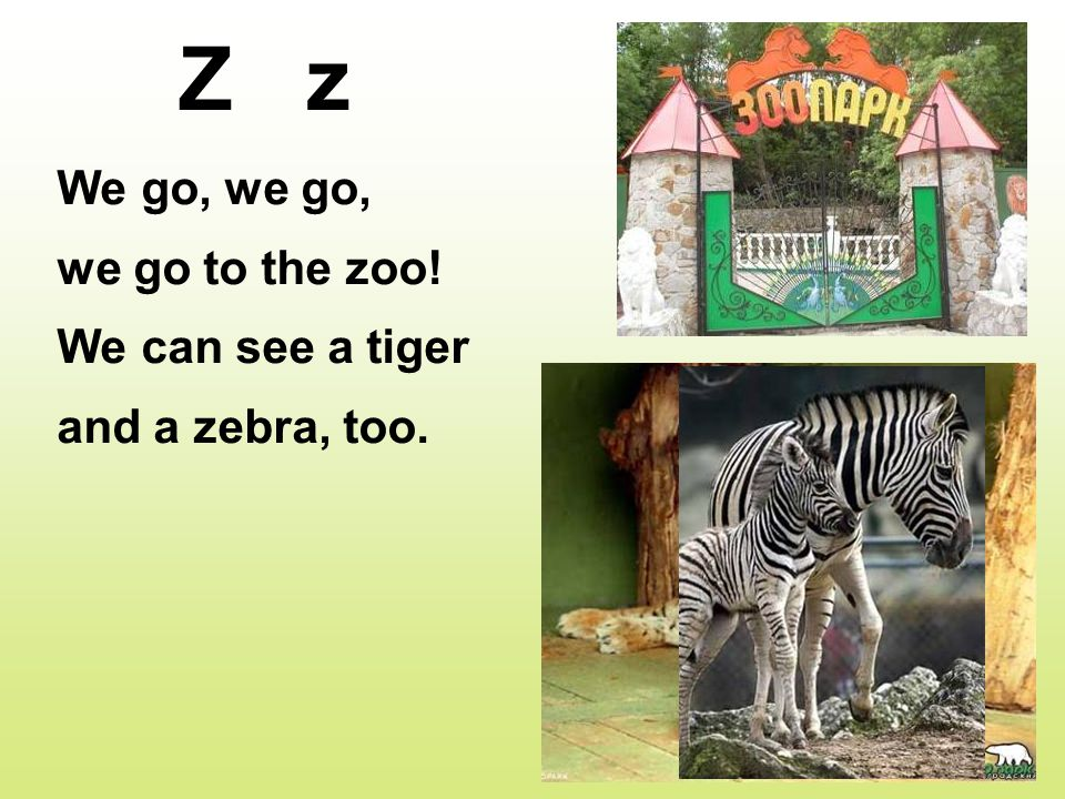 Z z We go, we go, we go to the zoo! We can see a tiger