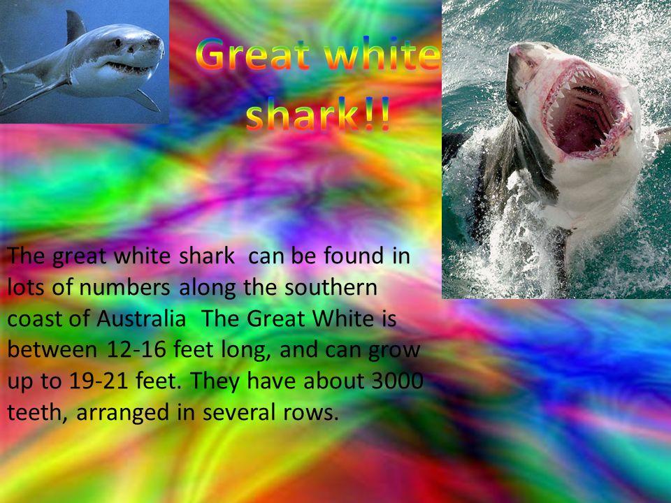 Great white shark!!