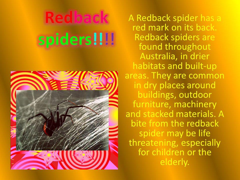 Redback spiders!!!!