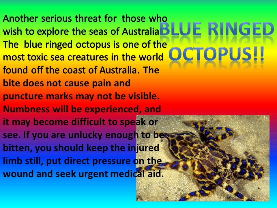 Another serious threat for those who wish to explore the seas of Australia. The blue ringed octopus is one of the most toxic sea creatures in the world found off the coast of Australia. The bite does not cause pain and puncture marks may not be visible. Numbness will be experienced, and it may become difficult to speak or see. If you are unlucky enough to be bitten, you should keep the injured limb still, put direct pressure on the wound and seek urgent medical aid.