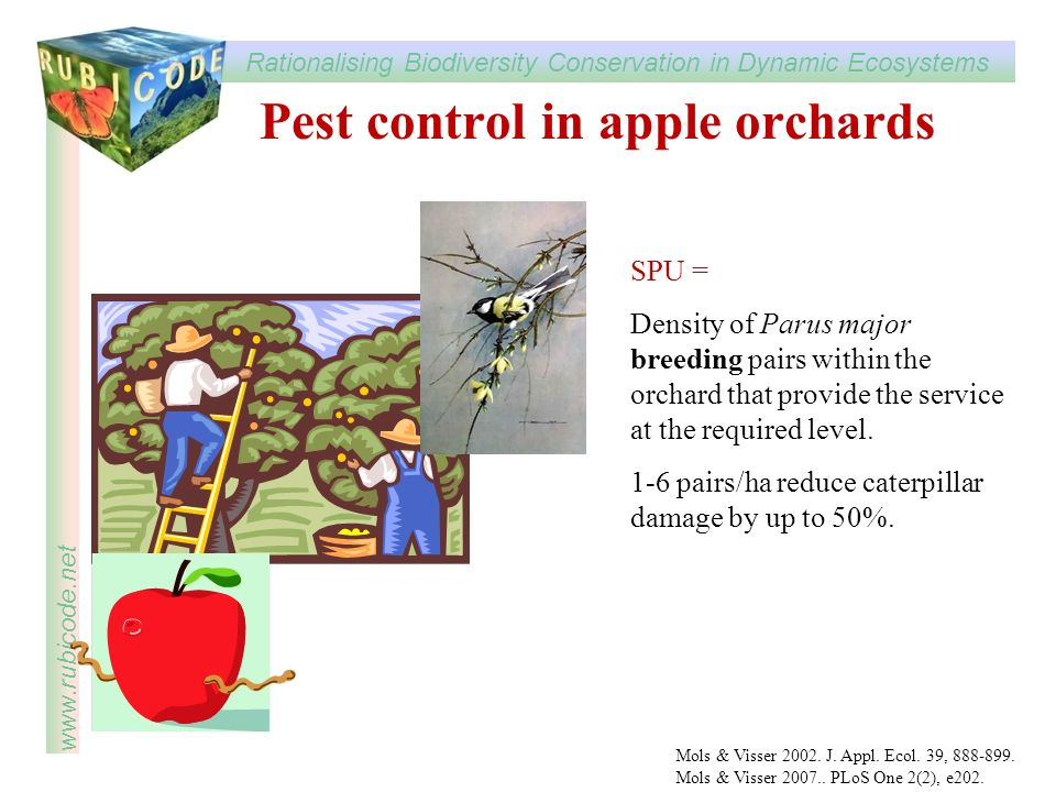 Pest control in apple orchards