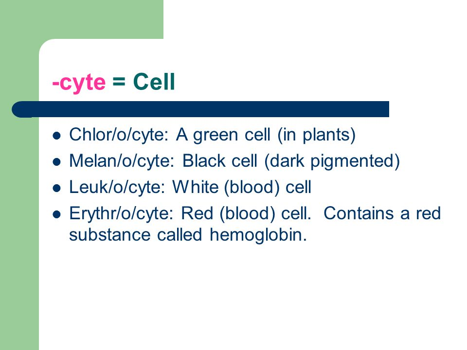 -cyte = Cell Chlor/o/cyte: A green cell (in plants)