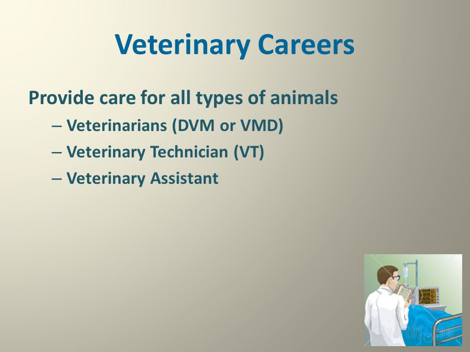 Veterinary Careers Provide care for all types of animals