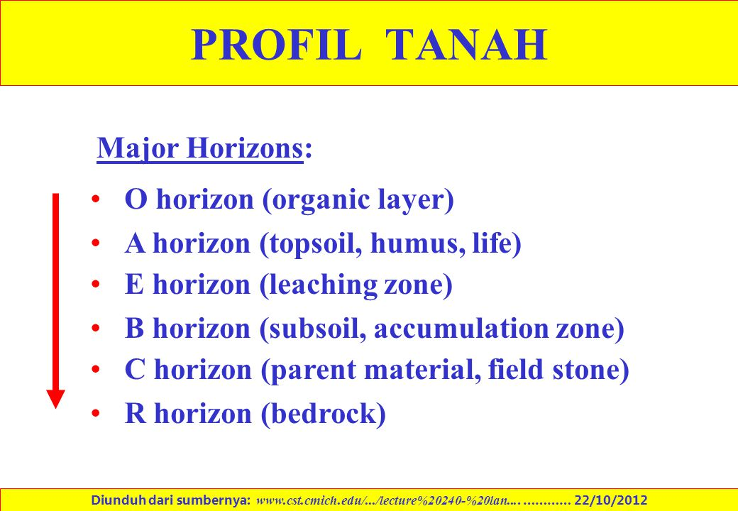 PROFIL TANAH Major Horizons: O horizon (organic layer)