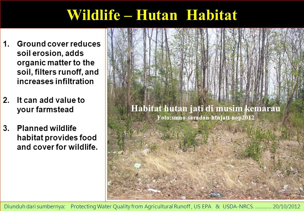 Wildlife – Hutan Habitat