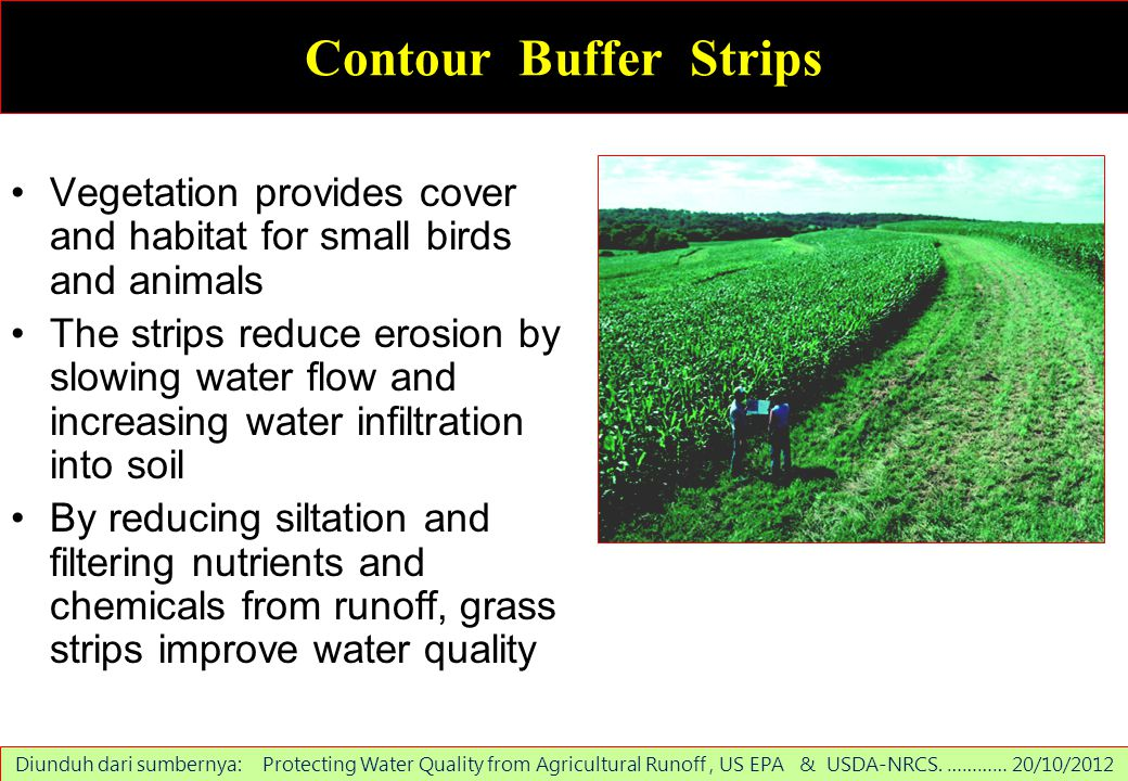 Contour Buffer Strips Vegetation provides cover and habitat for small birds and animals.