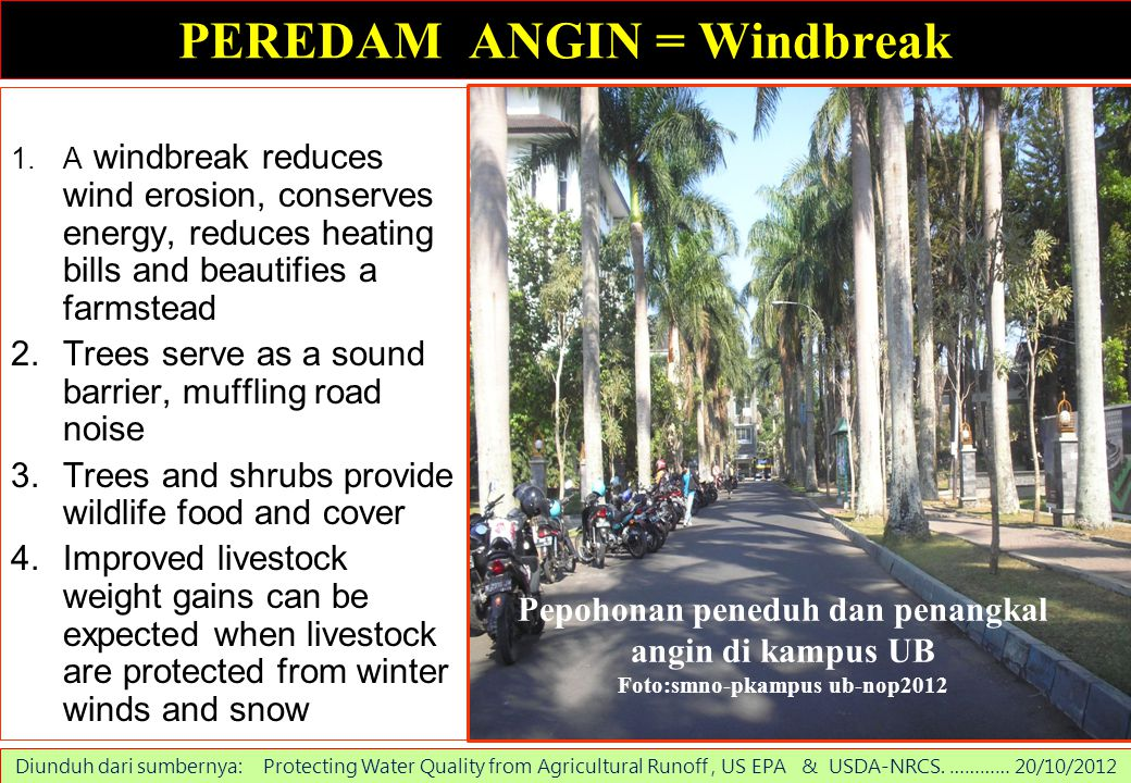 PEREDAM ANGIN = Windbreak