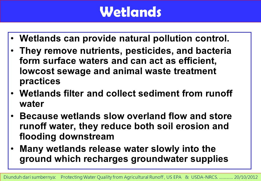 Wetlands Wetlands can provide natural pollution control.
