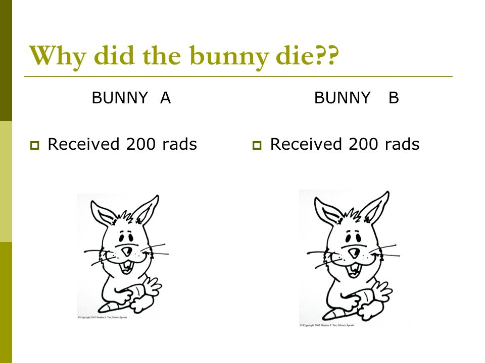 Why did the bunny die BUNNY A Received 200 rads BUNNY B