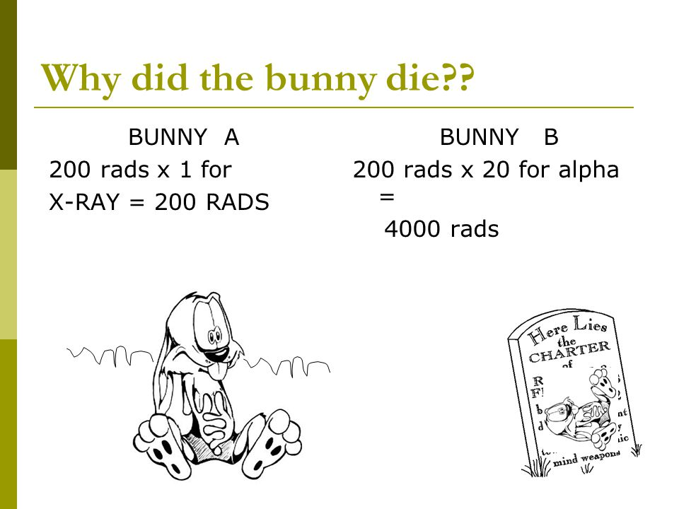 Why did the bunny die BUNNY A 200 rads x 1 for X-RAY = 200 RADS