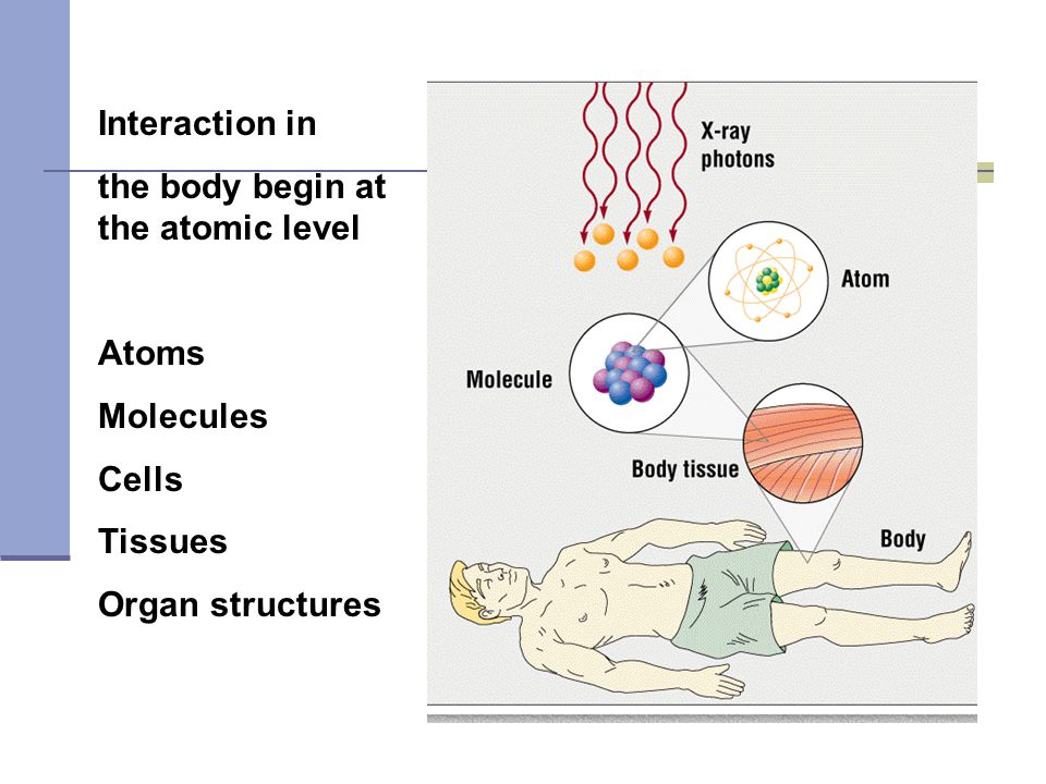 Interaction in the body begin at the atomic level Atoms Molecules Cells Tissues Organ structures