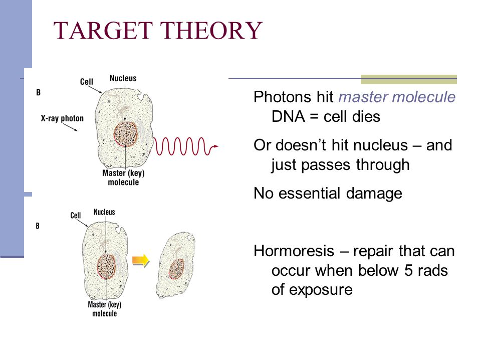 TARGET THEORY Photons hit master molecule DNA = cell dies