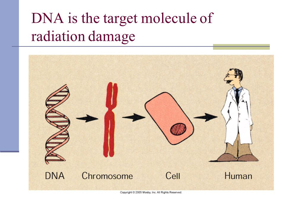 DNA is the target molecule of radiation damage