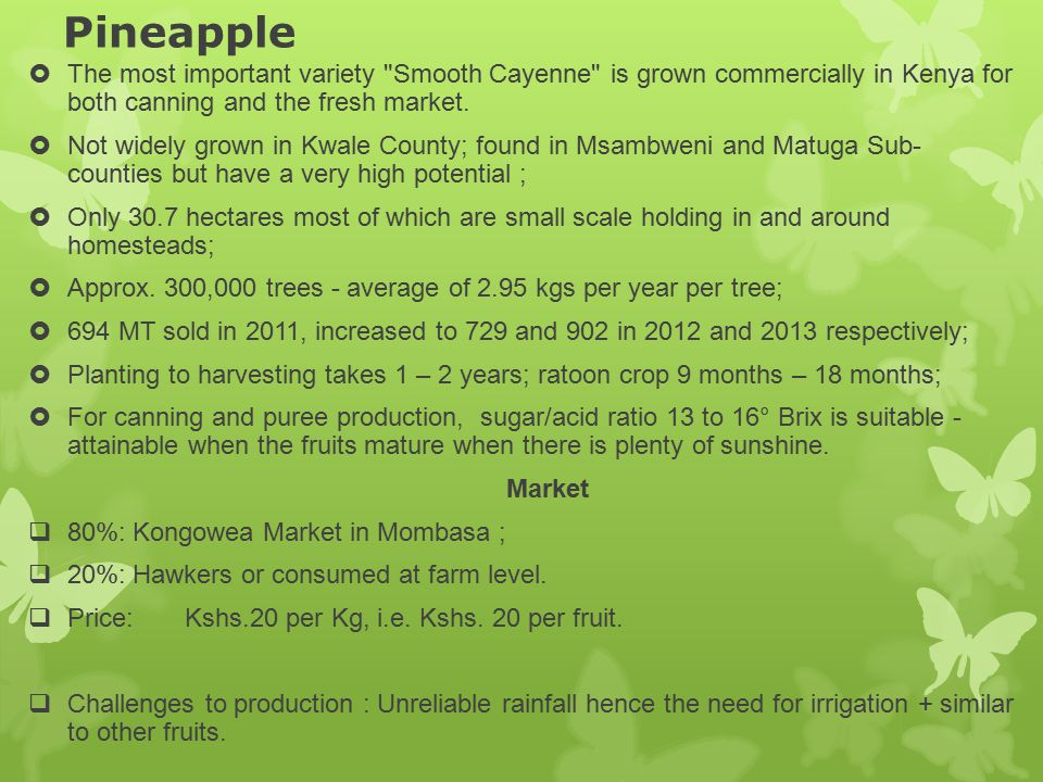 Pineapple The most important variety Smooth Cayenne is grown commercially in Kenya for both canning and the fresh market.