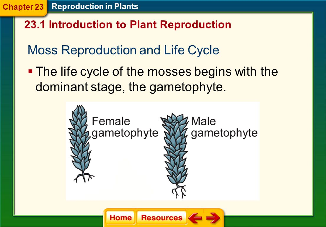 Moss Reproduction and Life Cycle