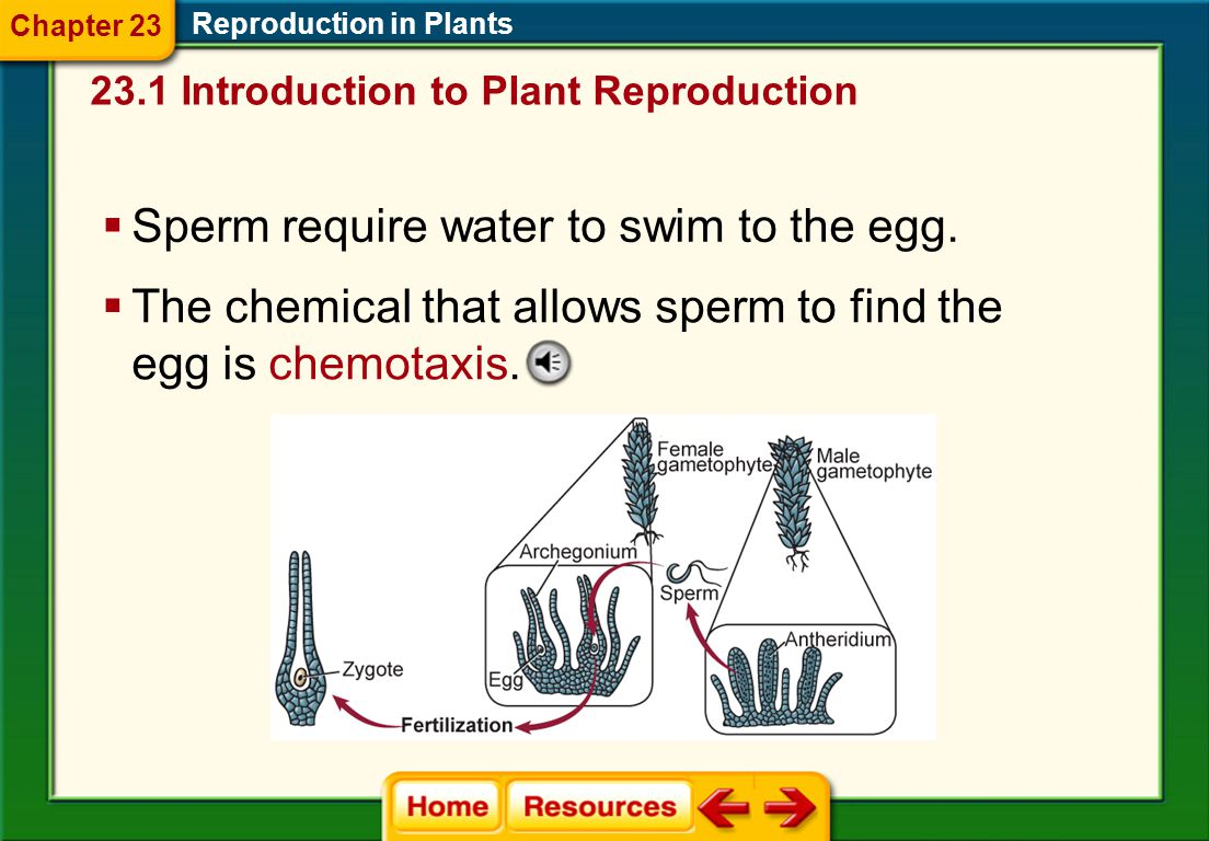 Sperm require water to swim to the egg.