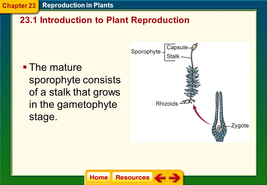 Chapter 23 Reproduction in Plants. 23.1 Introduction to Plant Reproduction.