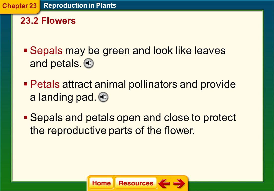 Sepals may be green and look like leaves and petals.