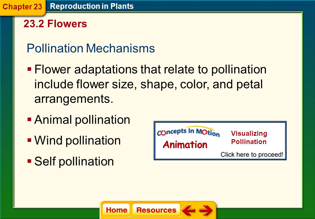 Pollination Mechanisms