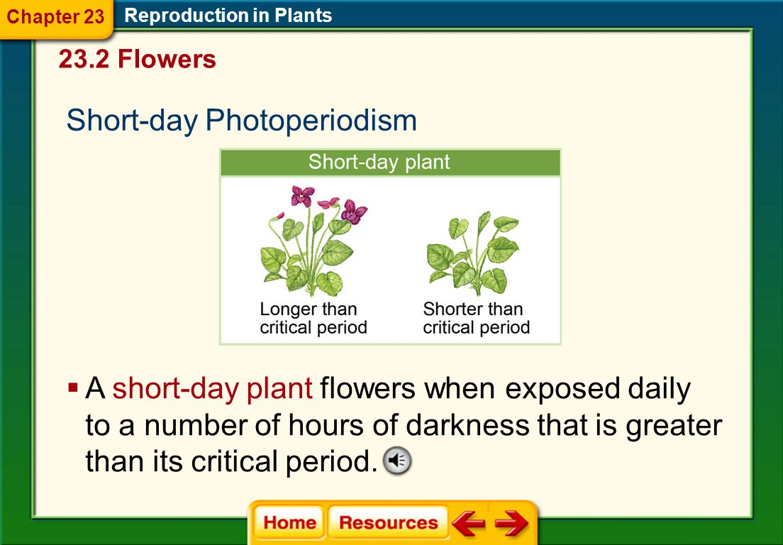 Short-day Photoperiodism
