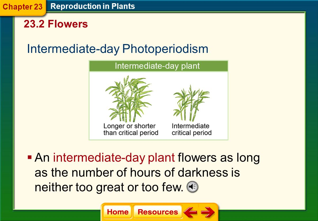 Intermediate-day Photoperiodism