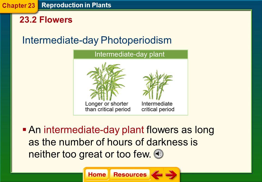 Intermediate-day Photoperiodism